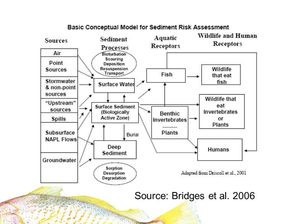 Source: Bridges et al. 2006