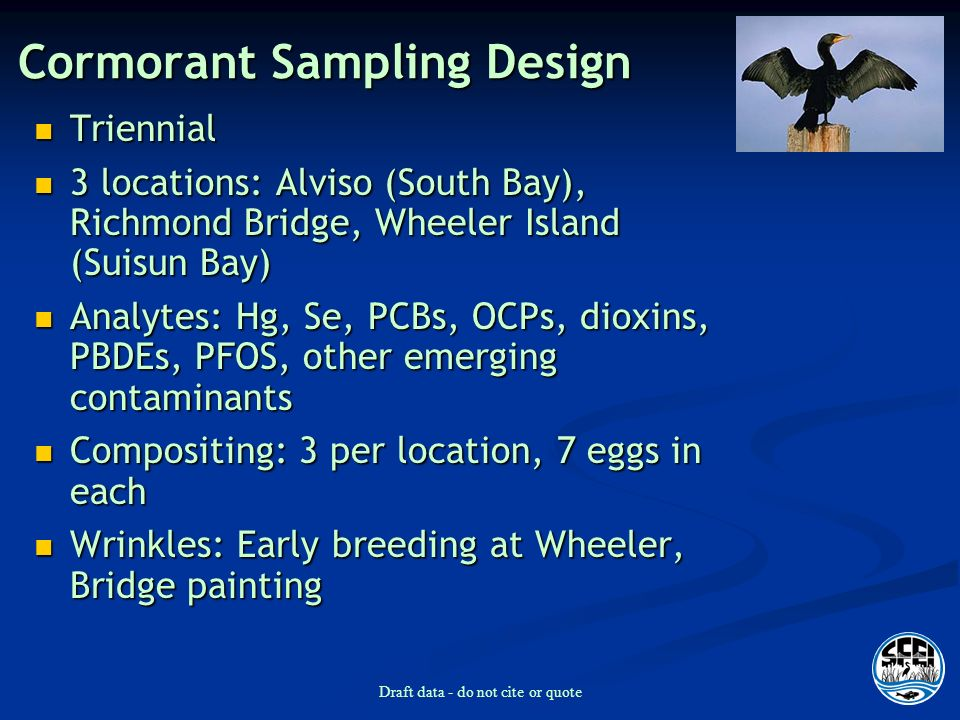Draft data - do not cite or quote Cormorant Sampling Design Triennial Triennial 3 locations: Alviso (South Bay), Richmond Bridge, Wheeler Island (Suisun Bay) 3 locations: Alviso (South Bay), Richmond Bridge, Wheeler Island (Suisun Bay) Analytes: Hg, Se, PCBs, OCPs, dioxins, PBDEs, PFOS, other emerging contaminants Analytes: Hg, Se, PCBs, OCPs, dioxins, PBDEs, PFOS, other emerging contaminants Compositing: 3 per location, 7 eggs in each Compositing: 3 per location, 7 eggs in each Wrinkles: Early breeding at Wheeler, Bridge painting Wrinkles: Early breeding at Wheeler, Bridge painting