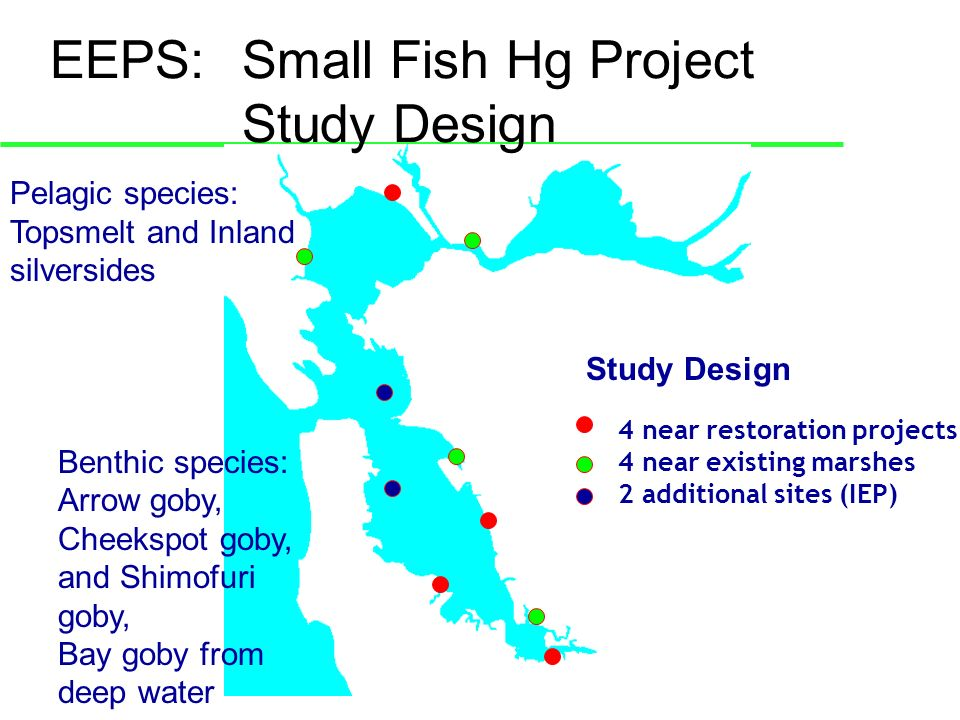EEPS: Small Fish Hg Project Study Design 4 near restoration projects 4 near existing marshes 2 additional sites (IEP) Pelagic species: Topsmelt and Inland silversides Benthic species: Arrow goby, Cheekspot goby, and Shimofuri goby, Bay goby from deep water Study Design