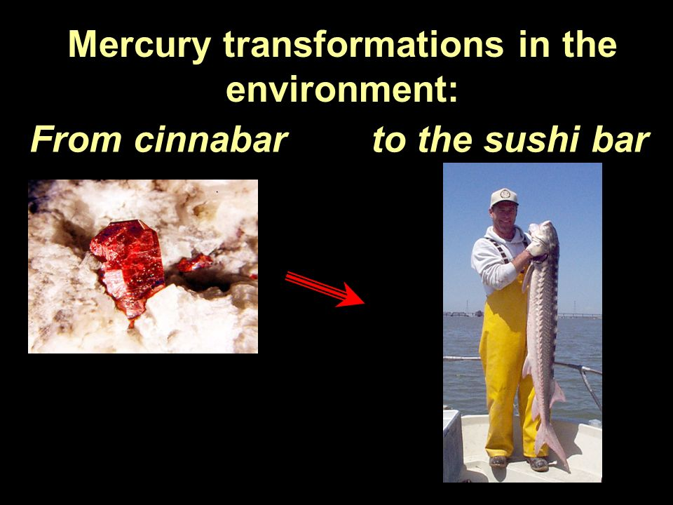 Mercury transformations in the environment: From cinnabar to the sushi bar