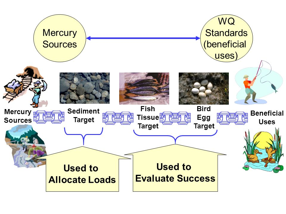 Mercury Sources WQ Standards (beneficial uses) Used to Evaluate Success Used to Allocate Loads Beneficial Uses Bird Egg Target Sediment Target Fish Ti