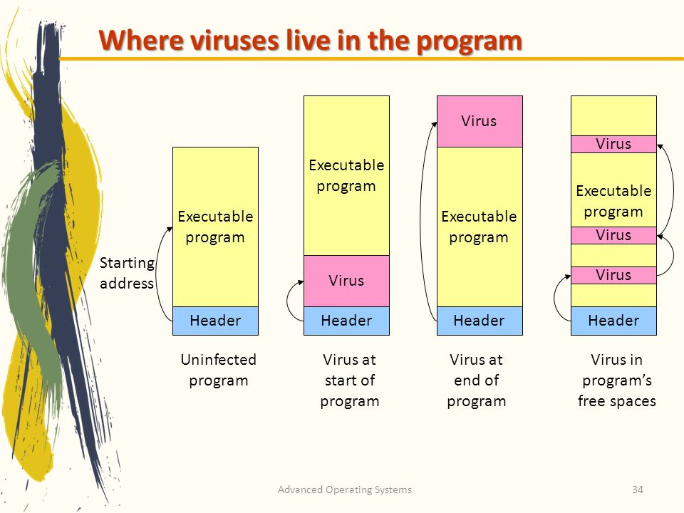 Advanced Operating Systems34 Where viruses live in the program Header Executable program Starting address Header Executable program Virus Executable p