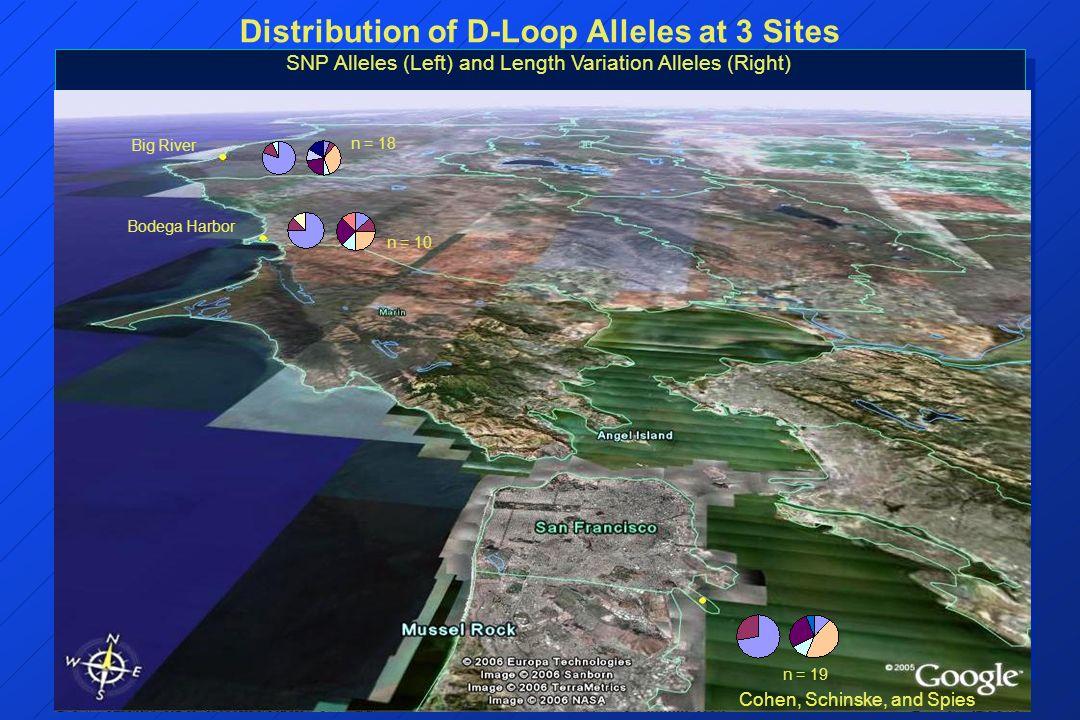 Bodega Harbor Big River Distribution of D-Loop Alleles at 3 Sites SNP Alleles (Left) and Length Variation Alleles (Right) n = 18 n = 10 n = 19 Cohen,