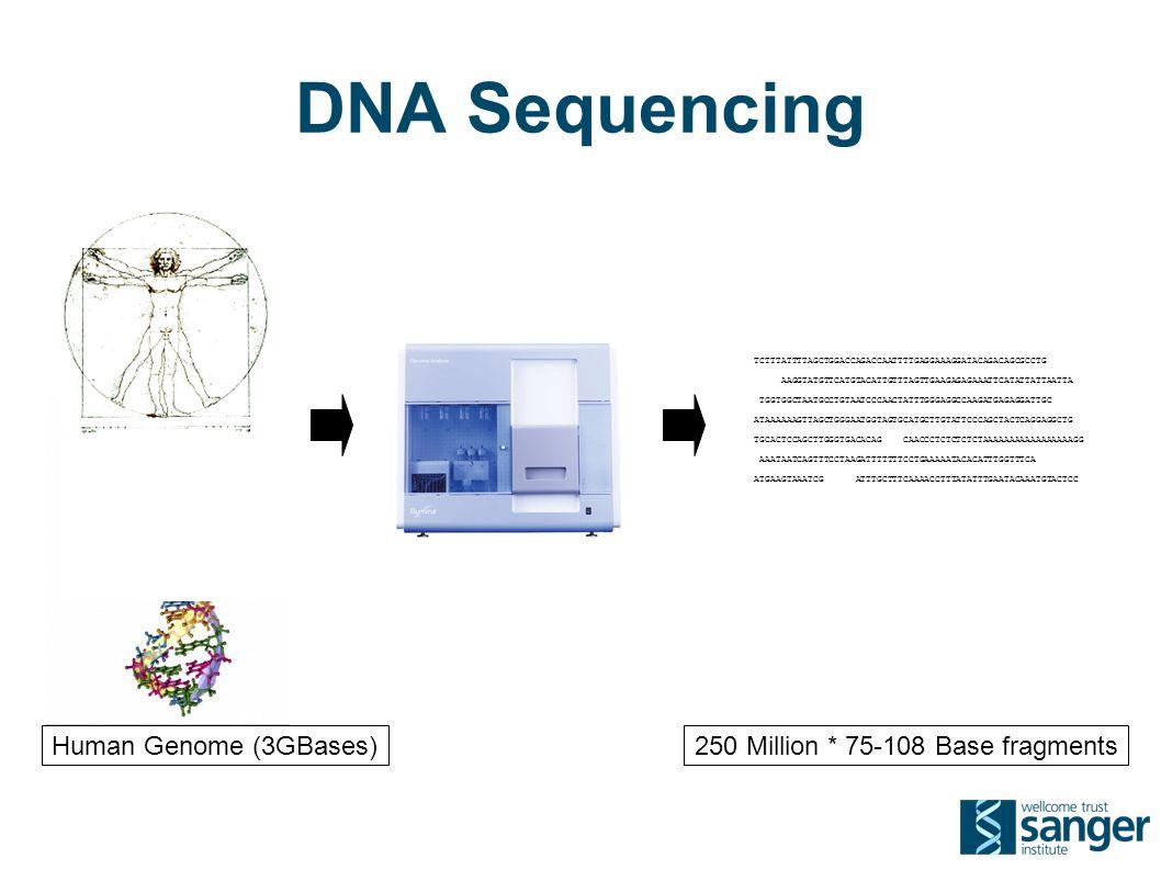 DNA Sequencing TCTTTATTTTAGCTGGACCAGACCAATTTTGAGGAAAGGATACAGACAGCGCCTG AAGGTATGTTCATGTACATTGTTTAGTTGAAGAGAGAAATTCATATTATTAATTA TGGTGGCTAATGCCTGTAATCCCAACTATTTGGGAGGCCAAGATGAGAGGATTGC ATAAAAAAGTTAGCTGGGAATGGTAGTGCATGCTTGTATTCCCAGCTACTCAGGAGGCTG TGCACTCCAGCTTGGGTGACACAG CAACCCTCTCTCTCTAAAAAAAAAAAAAAAAAGG AAATAATCAGTTTCCTAAGATTTTTTTCCTGAAAAATACACATTTGGTTTCA ATGAAGTAAATCG ATTTGCTTTCAAAACCTTTATATTTGAATACAAATGTACTCC 250 Million * 75-108 Base fragmentsHuman Genome (3GBases)