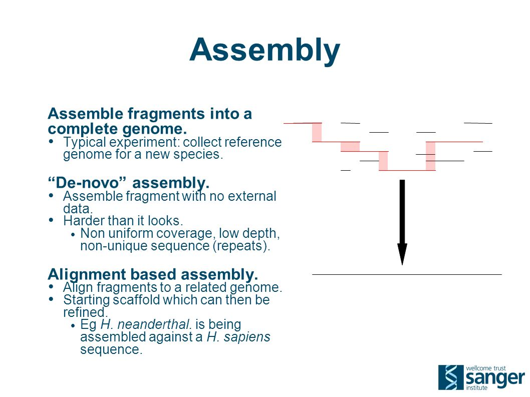Assembly Assemble fragments into a complete genome.