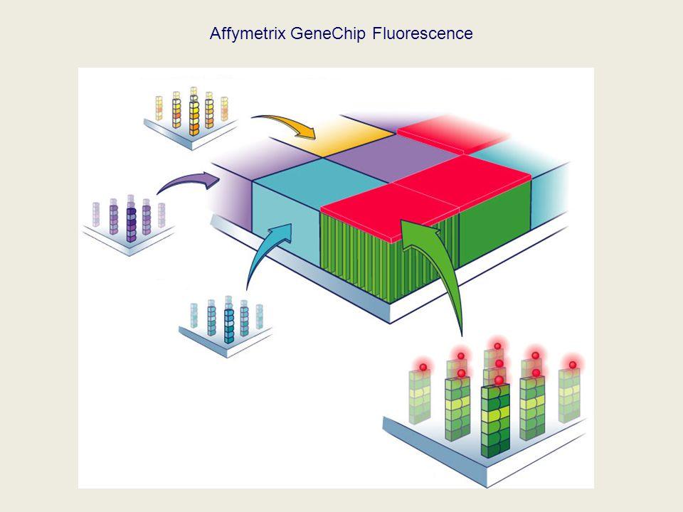 Affymetrix GeneChip Fluorescence
