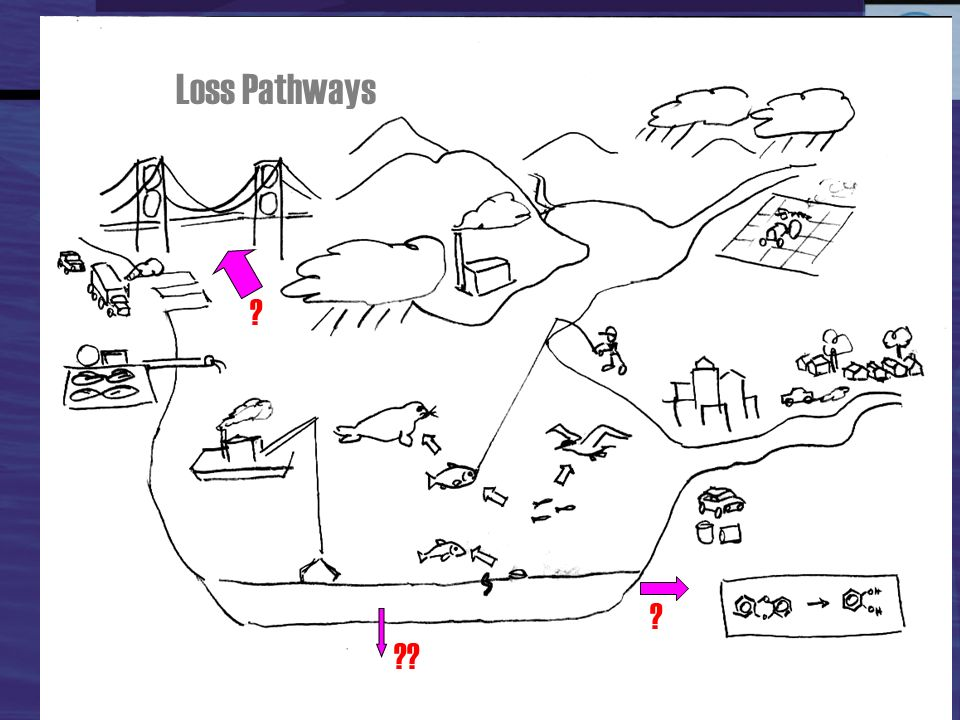 Loss Pathways