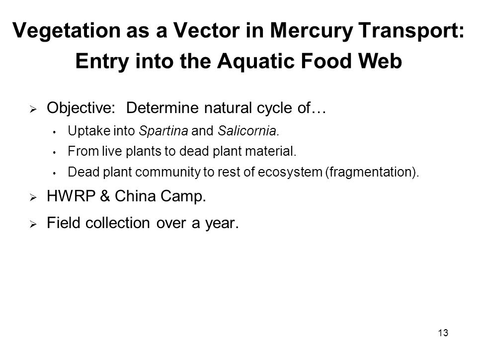13 Vegetation as a Vector in Mercury Transport: Entry into the Aquatic Food Web Objective: Determine natural cycle of… Uptake into Spartina and Salicornia.
