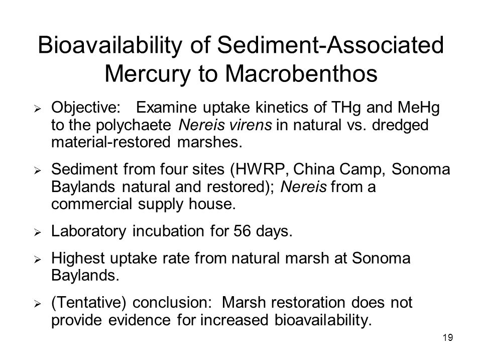 19 Bioavailability of Sediment-Associated Mercury to Macrobenthos Objective: Examine uptake kinetics of THg and MeHg to the polychaete Nereis virens in natural vs.