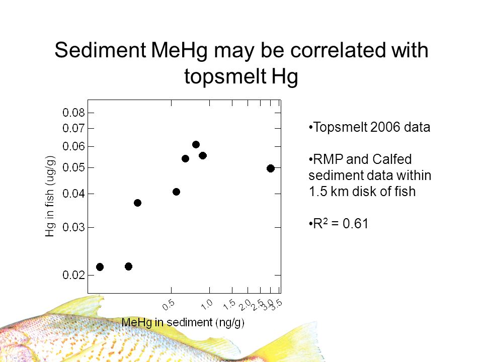 Sediment MeHg may be correlated with topsmelt Hg Topsmelt 2006 data RMP and Calfed sediment data within 1.5 km disk of fish R 2 = 0.61