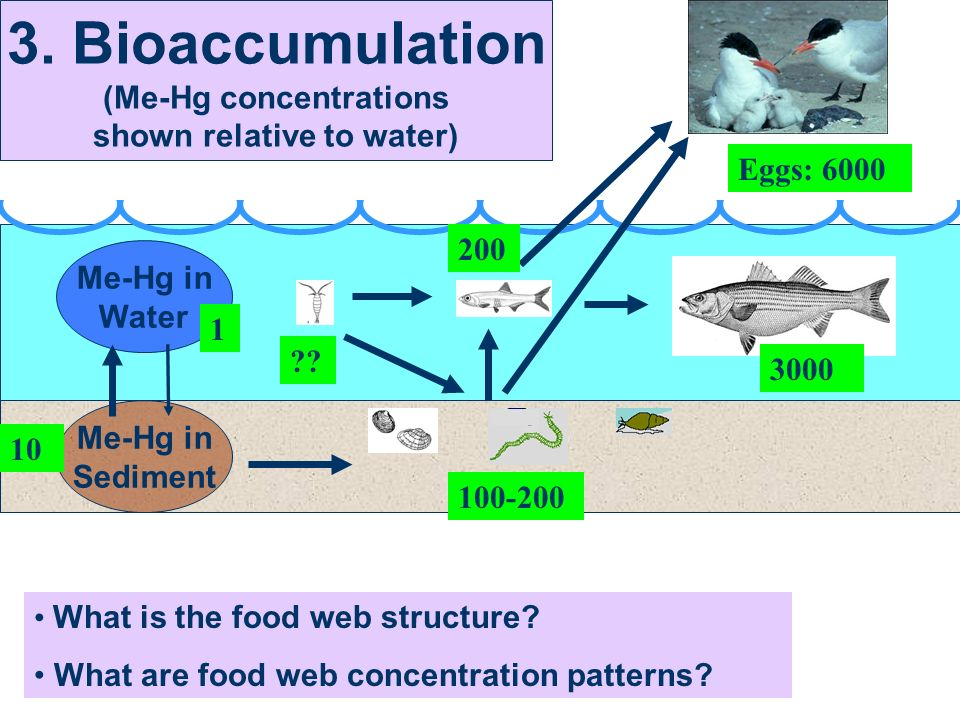 What is the food web structure. What are food web concentration patterns.