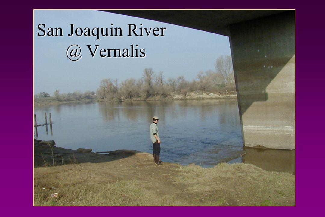 San Joaquin River @ Vernalis