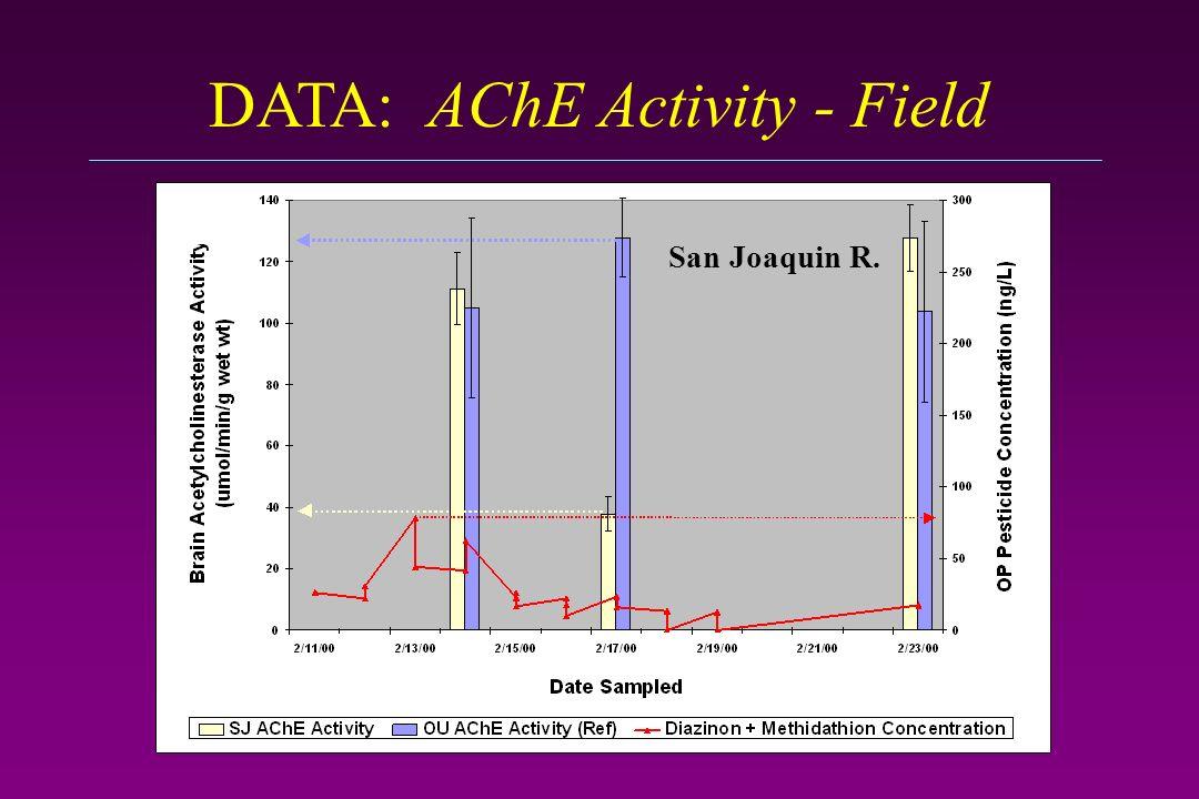 DATA: AChE Activity - Field San Joaquin R.