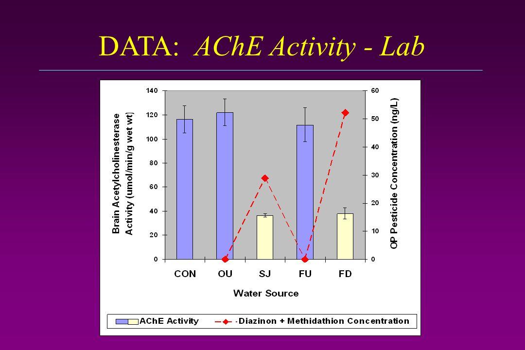 DATA: AChE Activity - Lab