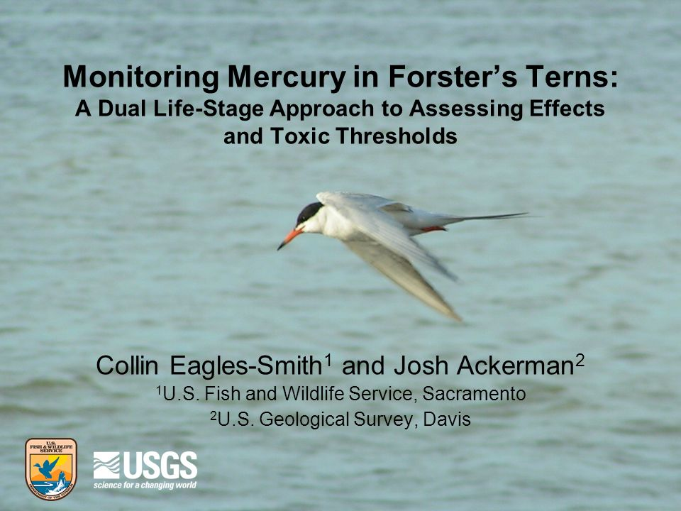 Monitoring Mercury in Forsters Terns: A Dual Life-Stage Approach to Assessing Effects and Toxic Thresholds Collin Eagles-Smith 1 and Josh Ackerman 2 1