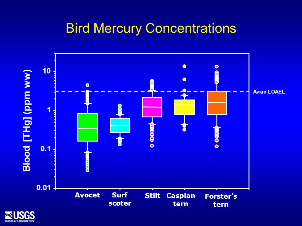 Bird Mercury Concentrations Blood [THg] (ppm ww) Forsters tern Caspian tern Avocet Stilt 0.01 0.1 1 10 Surf scoter Avian LOAEL