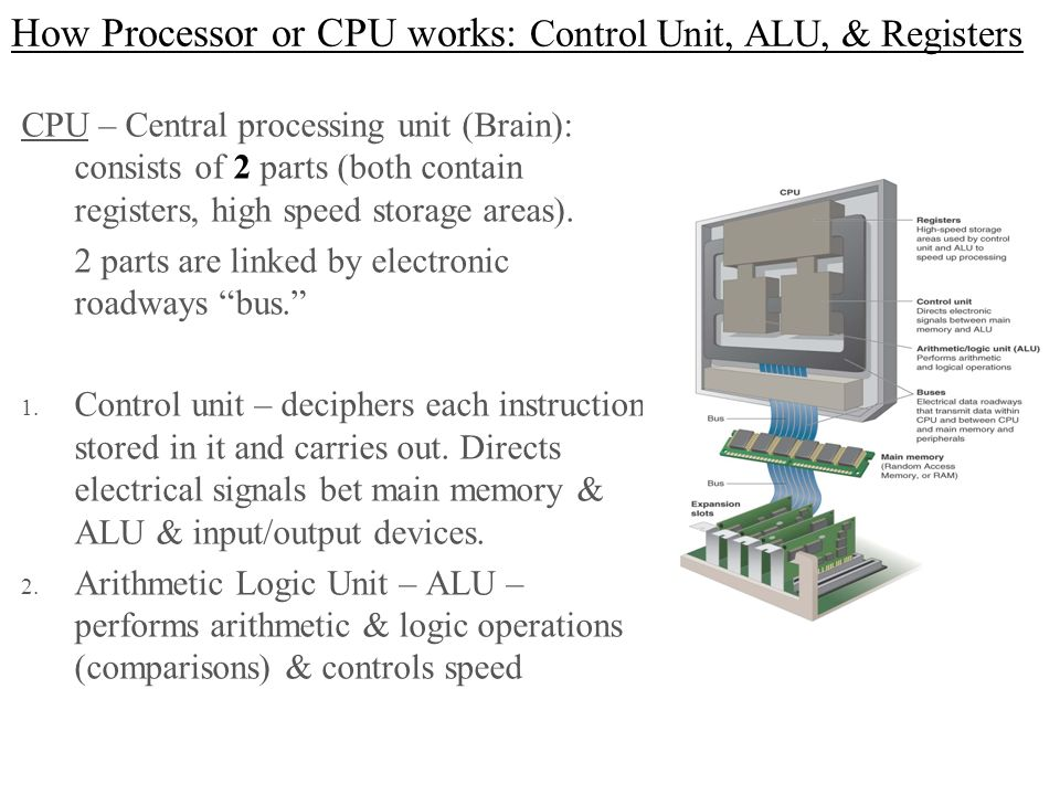 How Processor or CPU works: Control Unit, ALU, & Registers CPU – Central processing unit (Brain): consists of 2 parts (both contain registers, high sp