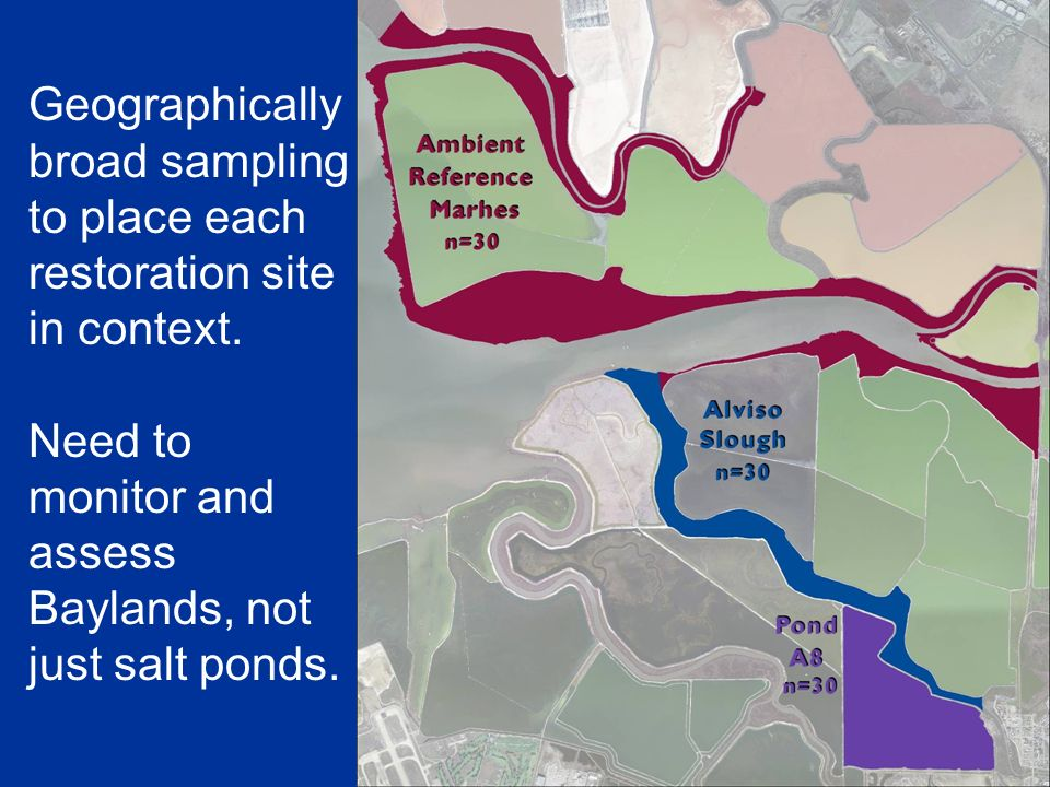 Geographically broad sampling to place each restoration site in context. Need to monitor and assess Baylands, not just salt ponds.