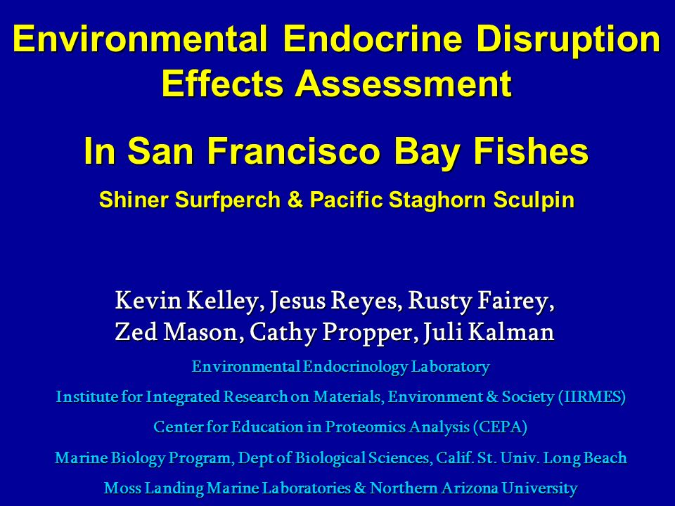 Environmental Endocrine Disruption Effects Assessment In San Francisco Bay Fishes Shiner Surfperch & Pacific Staghorn Sculpin Kevin Kelley, Jesus Reyes, Rusty Fairey, Zed Mason, Cathy Propper, Juli Kalman Environmental Endocrinology Laboratory Institute for Integrated Research on Materials, Environment & Society (IIRMES) Center for Education in Proteomics Analysis (CEPA) Marine Biology Program, Dept of Biological Sciences, Calif.