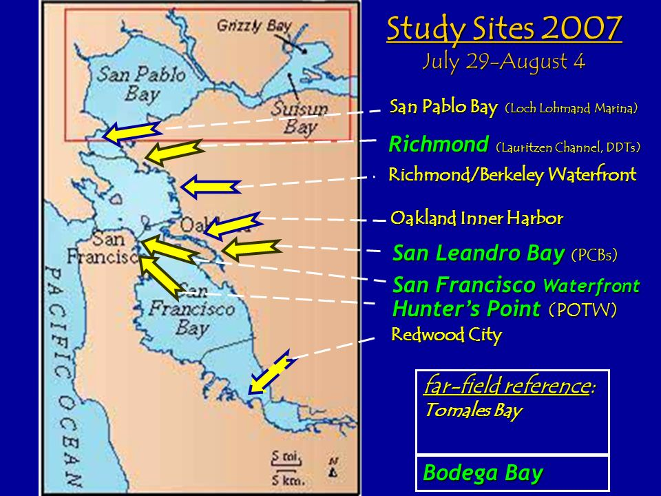 San Pablo Bay (Loch Lohmand Marina) Richmond/Berkeley Waterfront Oakland Inner Harbor Redwood City far-field reference: Tomales Bay Bodega Bay Study Sites 2007 July 29-August 4 Richmond (Lauritzen Channel, DDTs) San Leandro Bay (PCBs) San Francisco Waterfront Hunters Point (POTW)