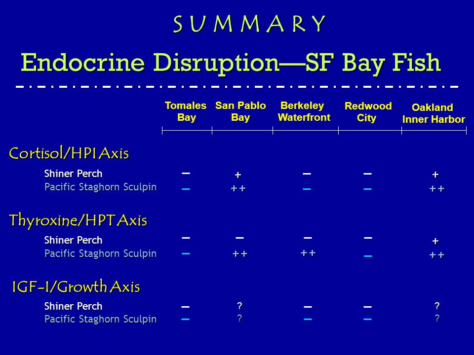 Thyroxine/HPT Axis IGF-I/Growth Axis Cortisol/HPI Axis San Pablo Bay Berkeley Waterfront Redwood City Oakland Inner Harbor Tomales Bay Shiner Perch Pacific Staghorn Sculpin Shiner Perch Pacific Staghorn Sculpin Shiner Perch Pacific Staghorn Sculpin + + ++ ++ + ++ ++ ++ ?.