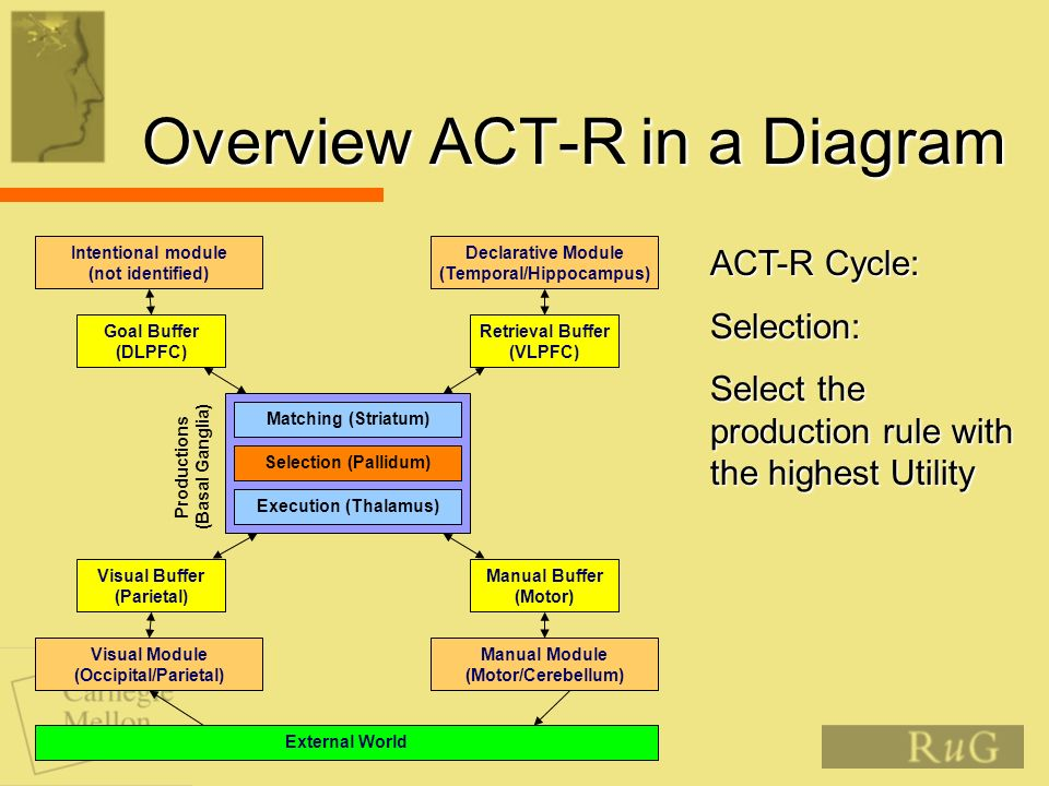Overview ACT-R in a Diagram Matching (Striatum) Selection (Pallidum) Execution (Thalamus) Productions (Basal Ganglia) Retrieval Buffer (VLPFC) Goal Bu