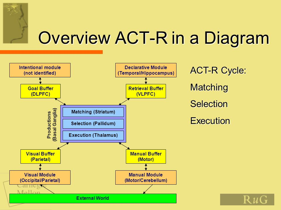 Overview ACT-R in a Diagram Matching (Striatum) Selection (Pallidum) Execution (Thalamus) Productions (Basal Ganglia) Retrieval Buffer (VLPFC) Goal Buffer (DLPFC) Manual Buffer (Motor) Visual Buffer (Parietal) Declarative Module (Temporal/Hippocampus) Intentional module (not identified) Visual Module (Occipital/Parietal) Manual Module (Motor/Cerebellum) External World ACT-R Cycle: MatchingSelectionExecution