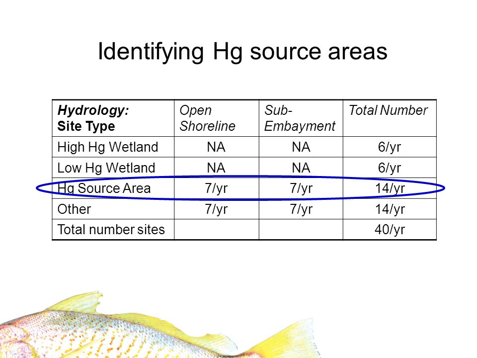 Identifying Hg source areas Hydrology: Site Type Open Shoreline Sub- Embayment Total Number High Hg WetlandNA 6/yr Low Hg WetlandNA 6/yr Hg Source Area7/yr 14/yr Other7/yr 14/yr Total number sites40/yr