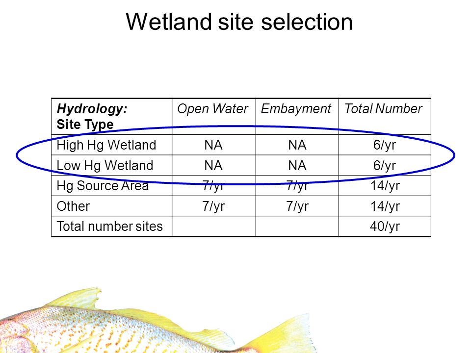 Hydrology: Site Type Open WaterEmbaymentTotal Number High Hg WetlandNA 6/yr Low Hg WetlandNA 6/yr Hg Source Area7/yr 14/yr Other7/yr 14/yr Total number sites40/yr Wetland site selection