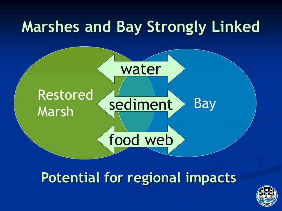 Marshes and Bay Strongly Linked Restored Marsh Bay sediment food web water Potential for regional impacts