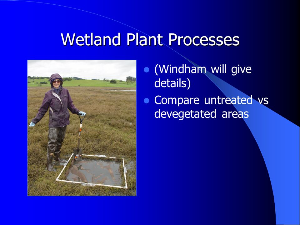 Wetland Plant Processes (Windham will give details) Compare untreated vs devegetated areas