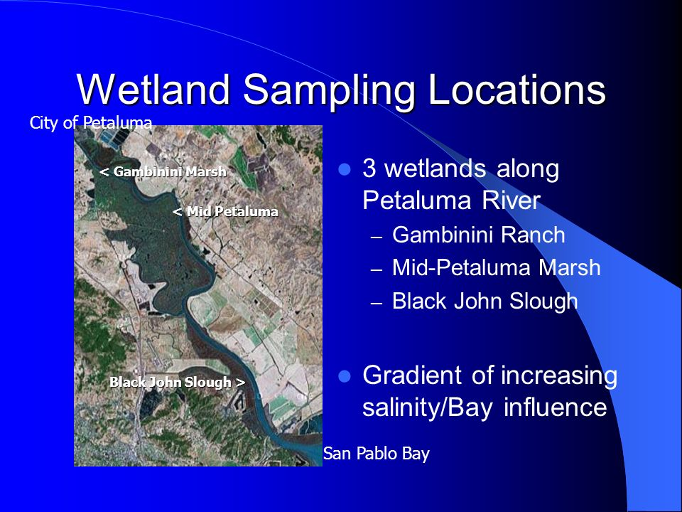 Wetland Sampling Locations 3 wetlands along Petaluma River – Gambinini Ranch – Mid-Petaluma Marsh – Black John Slough Gradient of increasing salinity/Bay influence San Pablo Bay City of Petaluma < Gambinini Marsh < Mid Petaluma Black John Slough >