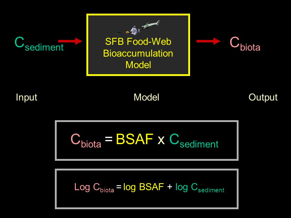 SFB Food-Web Bioaccumulation Model C sediment C biota Input Model Output C biota = BSAF x C sediment Log C biota = log BSAF + log C sediment