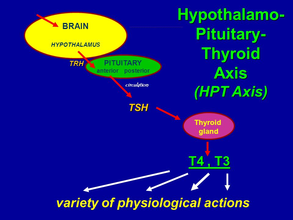 T4, T3 variety of physiological actions BRAIN HYPOTHALAMUS TRH PITUITARY anterior posterior TSH Thyroid gland circulation Hypothalamo-Pituitary-Thyroi