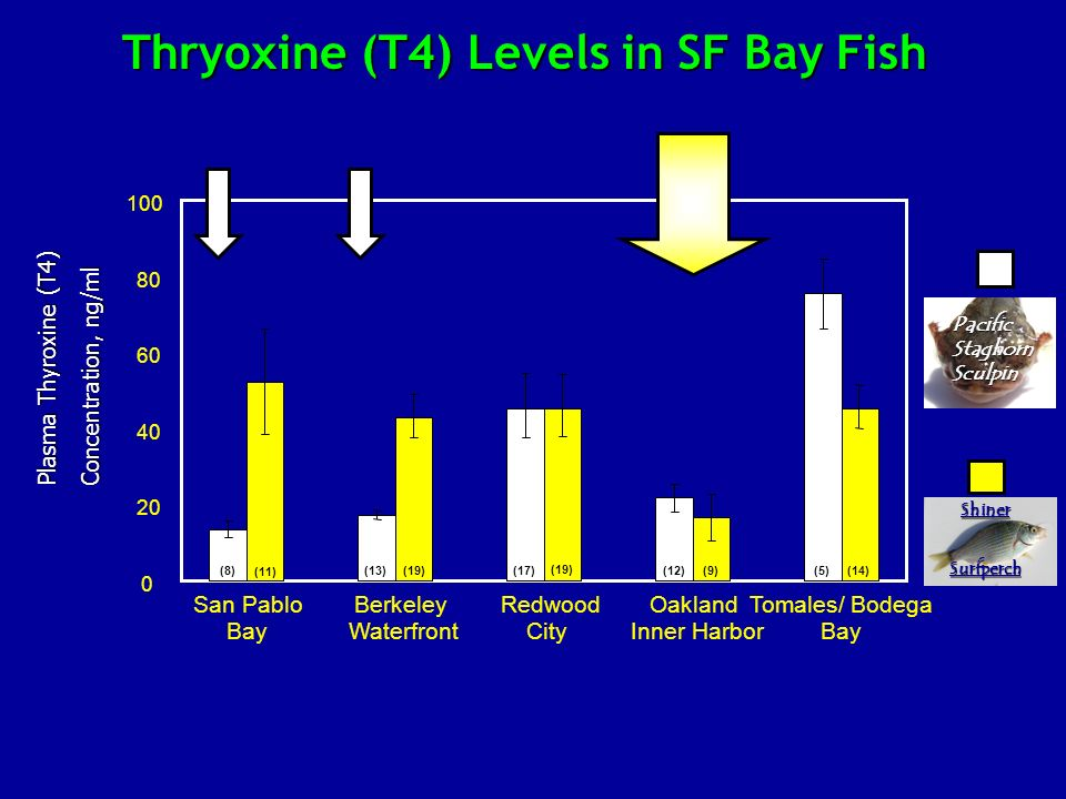 0 20 40 60 80 100 San Pablo Bay Berkeley Waterfront Redwood City Oakland Inner Harbor Tomales/ Bodega Bay Plasma Thyroxine (T4) Concentration, ng/ml S