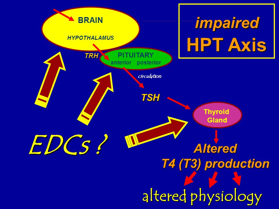 Altered T4 (T3) production BRAIN HYPOTHALAMUS TRH PITUITARY anterior posterior TSH Thyroid Gland circulation impaired HPT Axis altered physiology EDCs