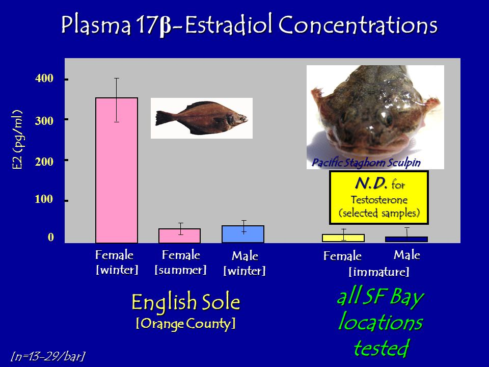 400 300 200 100 0 Pacific Staghorn Sculpin Plasma 17 β -Estradiol Concentrations Female [winter] Female [summer] Male [winter] Female Male [immature]