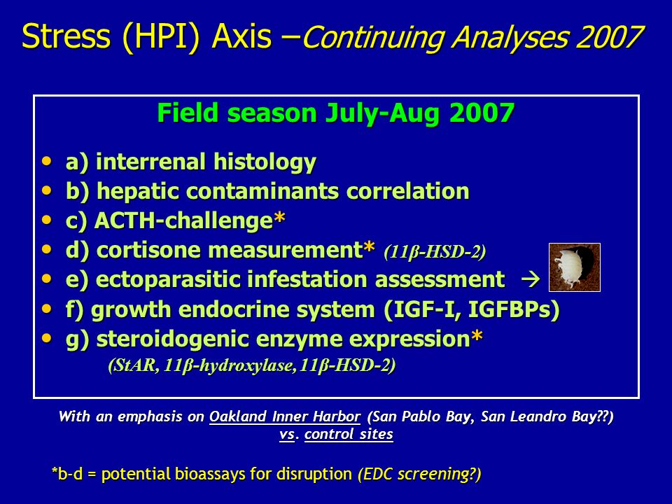 Stress (HPI) Axis – Continuing Analyses 2007 Field season July-Aug 2007 a) interrenal histology a) interrenal histology b) hepatic contaminants correl