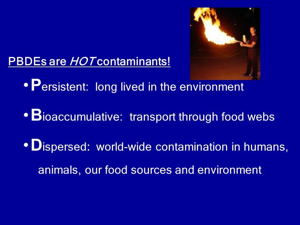 PBDEs are HOT contaminants.