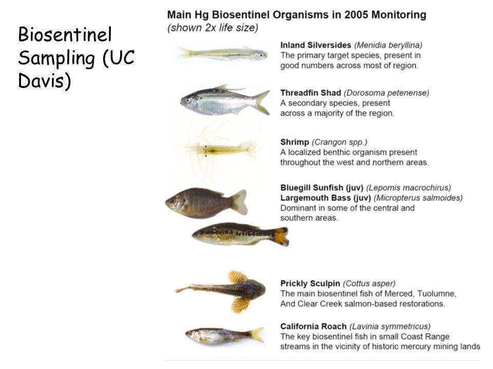 Biosentinel Sampling (UC Davis)