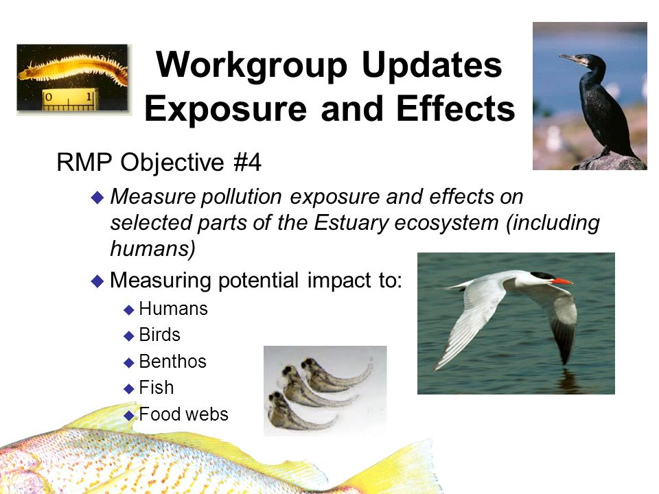 Workgroup Updates Emerging Contaminants 2008 Study examining alternatives to PBDEs Continuation of PFOS in harbor seals Budget $75,000/yr