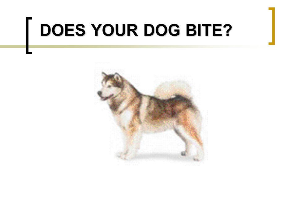 DOES YOUR DOG BITE?