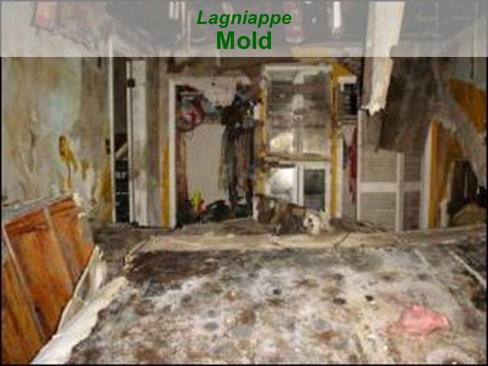 43 Lagniappe Mold