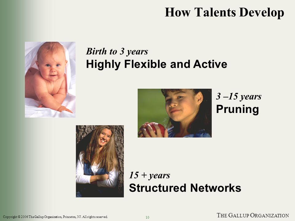 T HE G ALLUP O RGANIZATION 10 How Talents Develop Birth to 3 years Highly Flexible and Active 3 –15 years Pruning 15 + years Structured Networks Copyright © 2006 The Gallup Organization, Princeton, NJ.