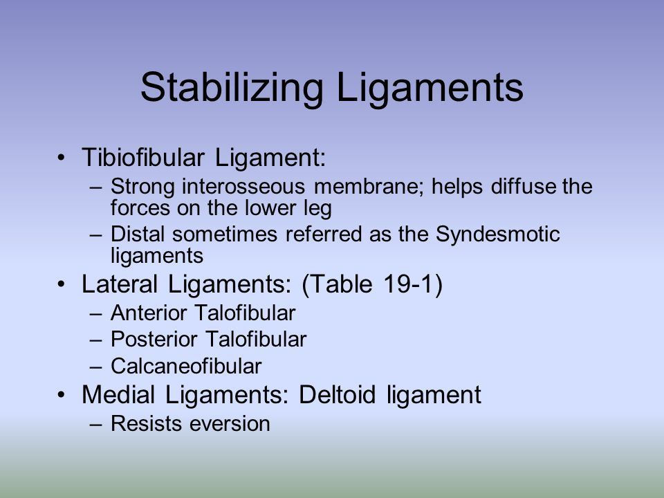 Stabilizing Ligaments Tibiofibular Ligament: –Strong interosseous membrane; helps diffuse the forces on the lower leg –Distal sometimes referred as th