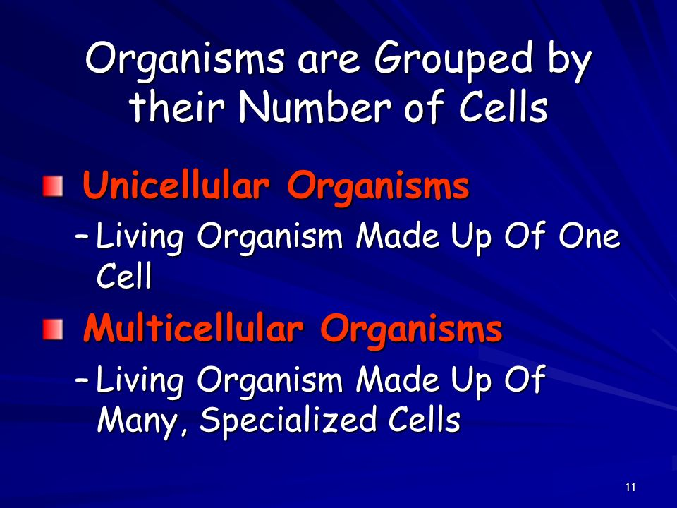11 Organisms are Grouped by their Number of Cells Unicellular Organisms Unicellular Organisms –Living Organism Made Up Of One Cell Multicellular Organ