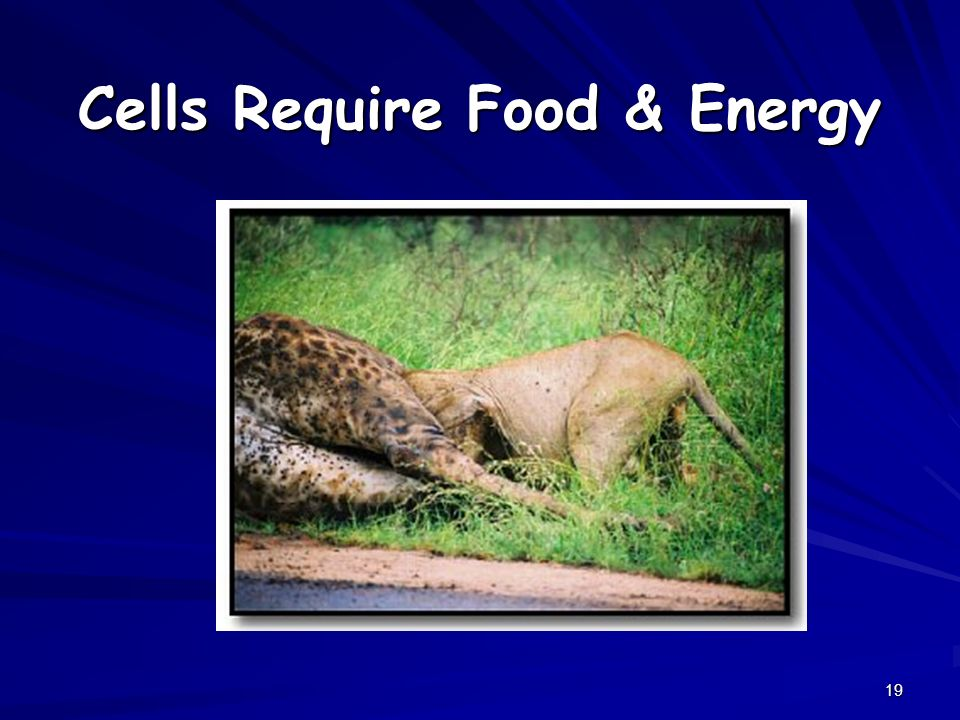 19 Cells Require Food & Energy