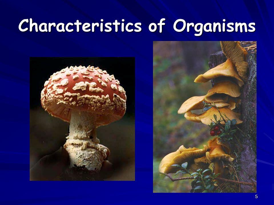 5 Characteristics of Organisms