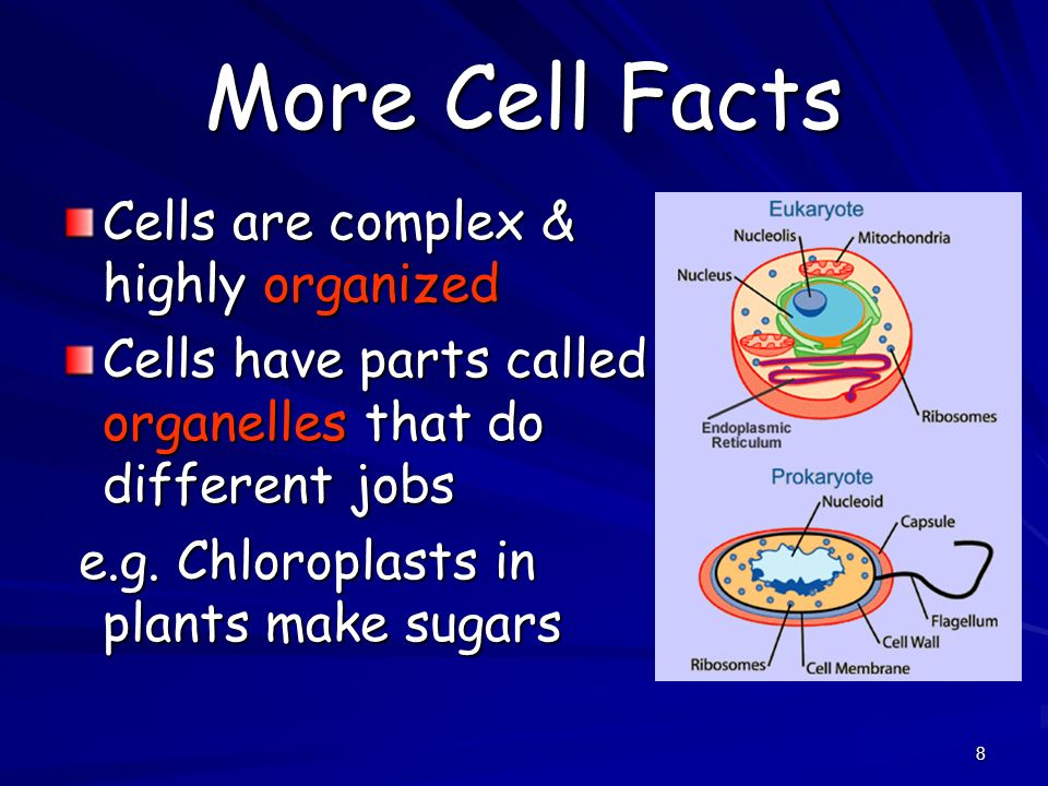 8 More Cell Facts Cells are complex & highly organized Cells have parts called organelles that do different jobs e.g. Chloroplasts in plants make suga