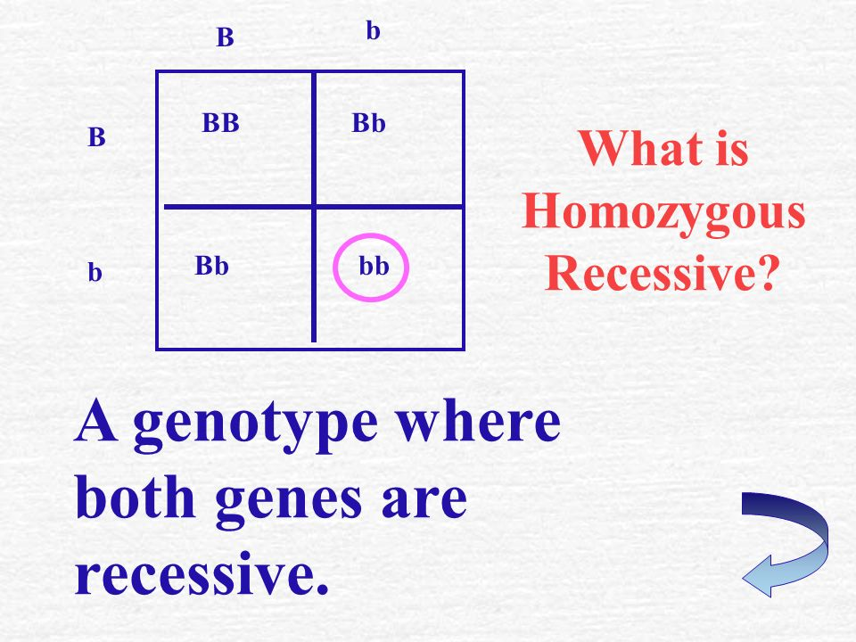 What is Heterozygous ? A genotype with one dominant and one recessive gene. BBBb bb b B B b